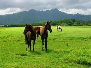 Bonitos caballos en una gran pradera verde