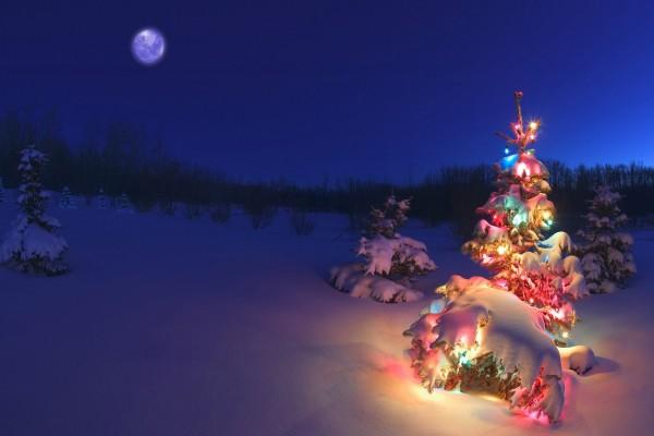 Árbol de Navidad cubierto de nieve y adornos