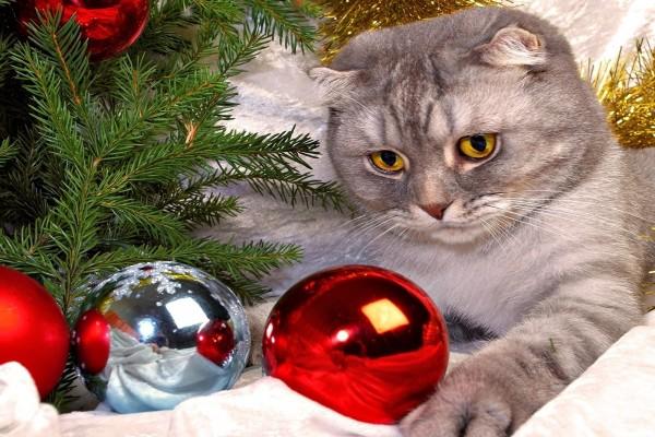 Un gato observando las bolas de Navidad