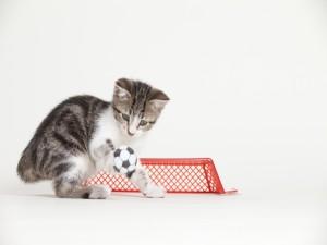 Postal: Un gato futbolista