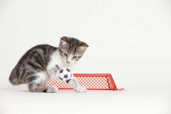 Un gato futbolista