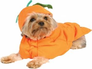 Perro disfrazado de calabaza en Halloween