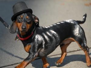 Postal: Un perro disfrazado en Halloween