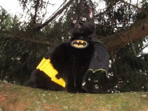 Postal: Gato con un disfraz de Batman