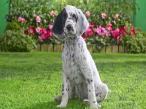 Un bonito perro sentado en el jardín