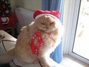 Postal: Un gracioso gato navideño