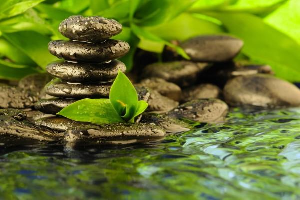 Piedras y hojas junto al agua