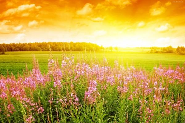 El sol iluminando la pradera verde y las flores