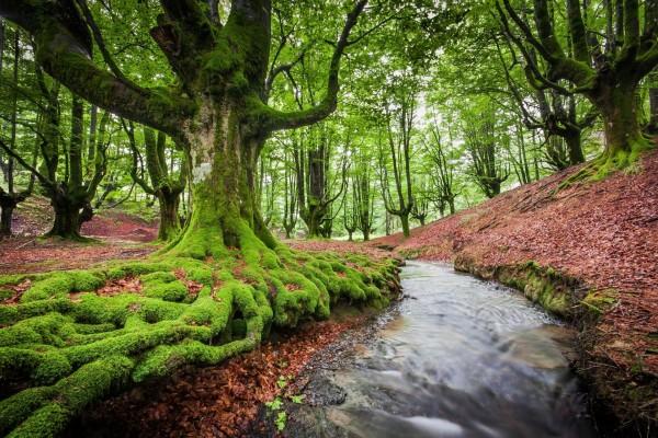 Arroyo en un bonito bosque