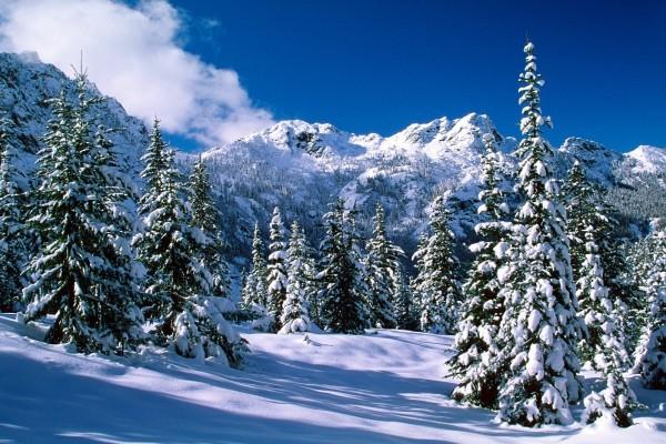 Nieve sobre los abetos y las montañas
