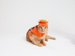 Postal: Un gato con disfraz de calabaza en Halloween