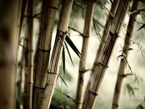 Postal: Bambú