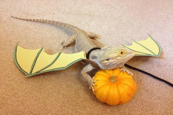 Un lagarto dragón en Halloween