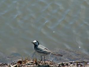 Un ave junto al agua