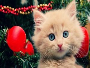 Un precioso gatito junto al árbol de Navidad