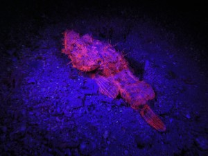 Postal: Un gran pez iluminado en el fondo marino