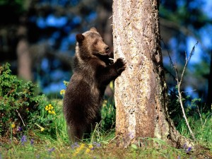 Un oso joven junto a un árbol
