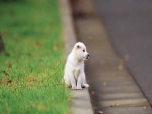 Perrito abandonado junto a una carretera