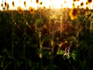 Una araña en su gran tela
