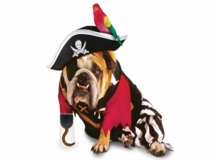 Un perro con disfraz de pirata