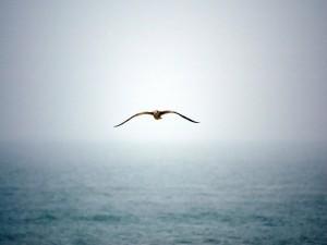 Ave volando sobre el mar