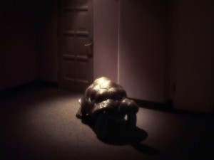 Un gran tortuga en casa