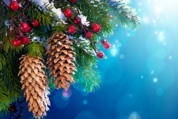 Piñas en un abeto de Navidad