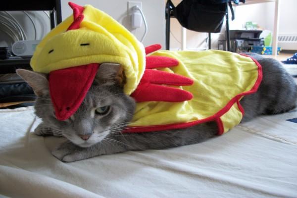 Un gato con disfraz de pollo