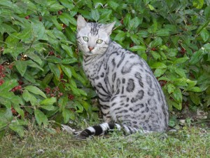Un precioso gato con ojos brillantes