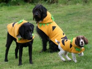 """Postal: Perros con disfraces de calabaza en el día de """"Halloween"""""""