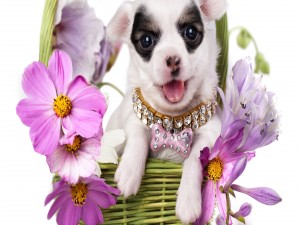 Postal: Una bella perrita en una cesta con flores