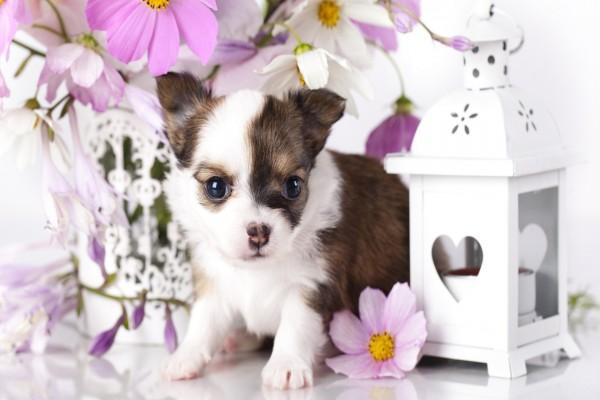 Un lindo perrito blanco con manchas marrones junto a un jarrón con flores