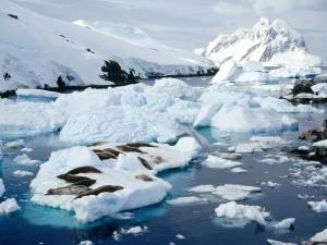 Focas dormidas sobre el hielo
