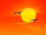 Gaviotas volando al atardecer