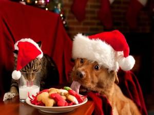 Perro y gato comiendo dulces navideños