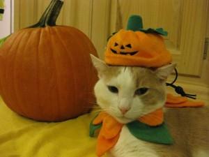 Postal: Un simpático gato con un disfraz de calabaza en Halloween