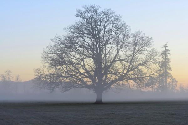 Niebla envolviendo a un árbol