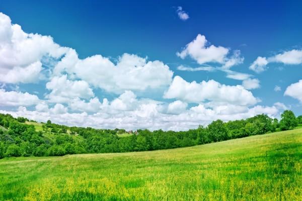 Árboles junto a la verde pradera