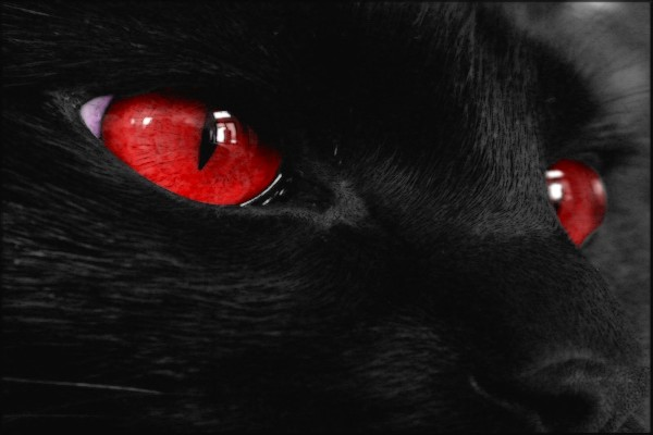Los ojos rojos de un gato negro