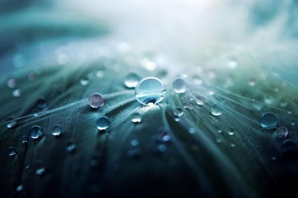Gotas de agua sobre unas plumas