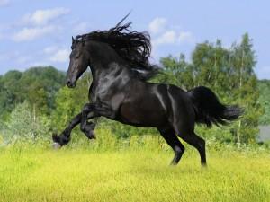 Postal: Un precioso caballo negro sobre la verde hierba
