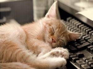 Gato dormido junto al teclado