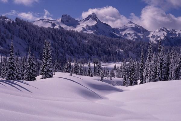 Blanca nieve en árboles y montañas