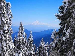 Postal: Preciosas vistas a una gran montaña entre abetos nevados