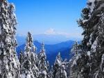 Preciosas vistas a una gran montaña entre abetos nevados