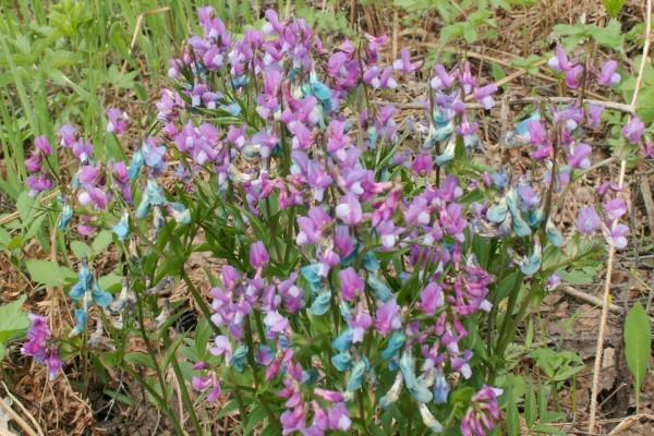 Planta con pequeñas flores de color lila