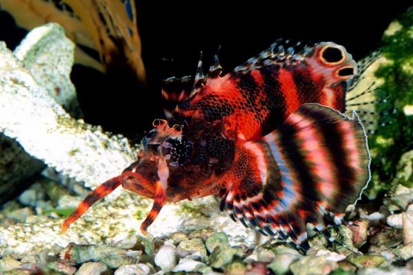 Un hermoso pez de bonitos colores