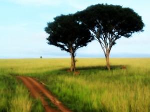 Postal: Dos árboles en el prado verde