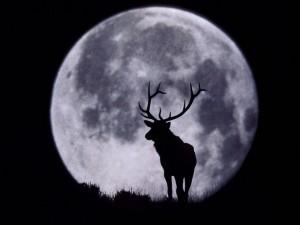 Un ciervo y la Luna llena