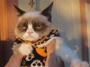 Postal: Un gato vestido para pasear en Halloween